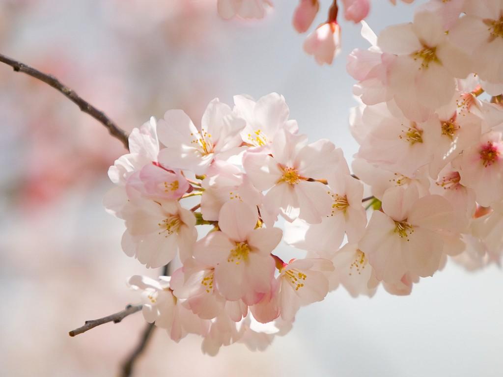 Уход за кожей весной