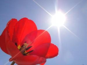 Солнечные лучи - частичка тепла и здоровья