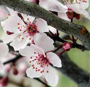 Лечение весенней аллергии