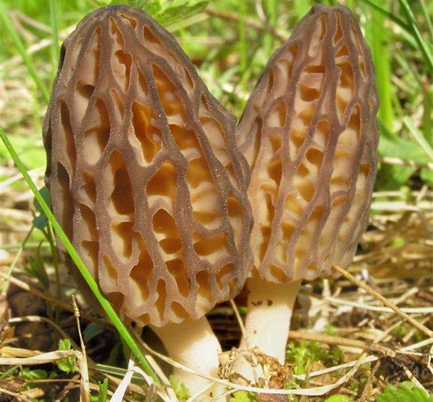 Бизнес план выращивание грибы вешанки